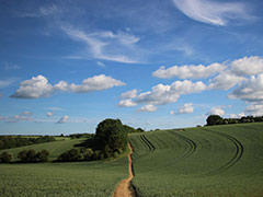 A path going straight through a field, clouds in the sky